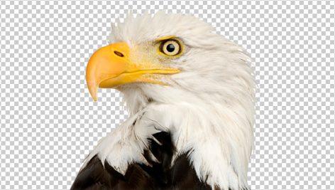 png بدون بک گراند عقاب